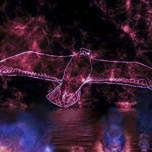 Ein aus Licht gezeichneter Vogel steigt am Sternenhimmel auf.